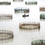 Туго Чэн, Гонконг / Tugo Cheng, Hong Kong, Открытие года, Фотоконкурс International Photographer of the Year