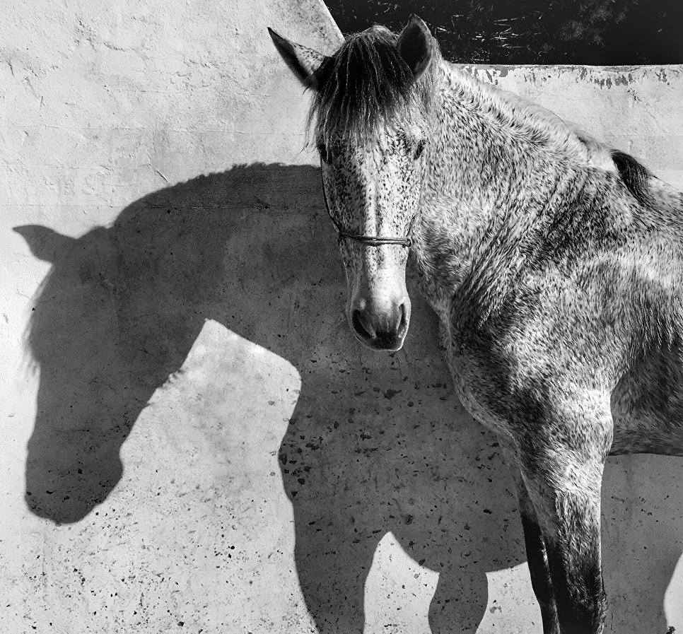 Francesca Tonegutti, Италия, 1-е место в категории «Животные», Фотоконкурс iPhone Photography Awards