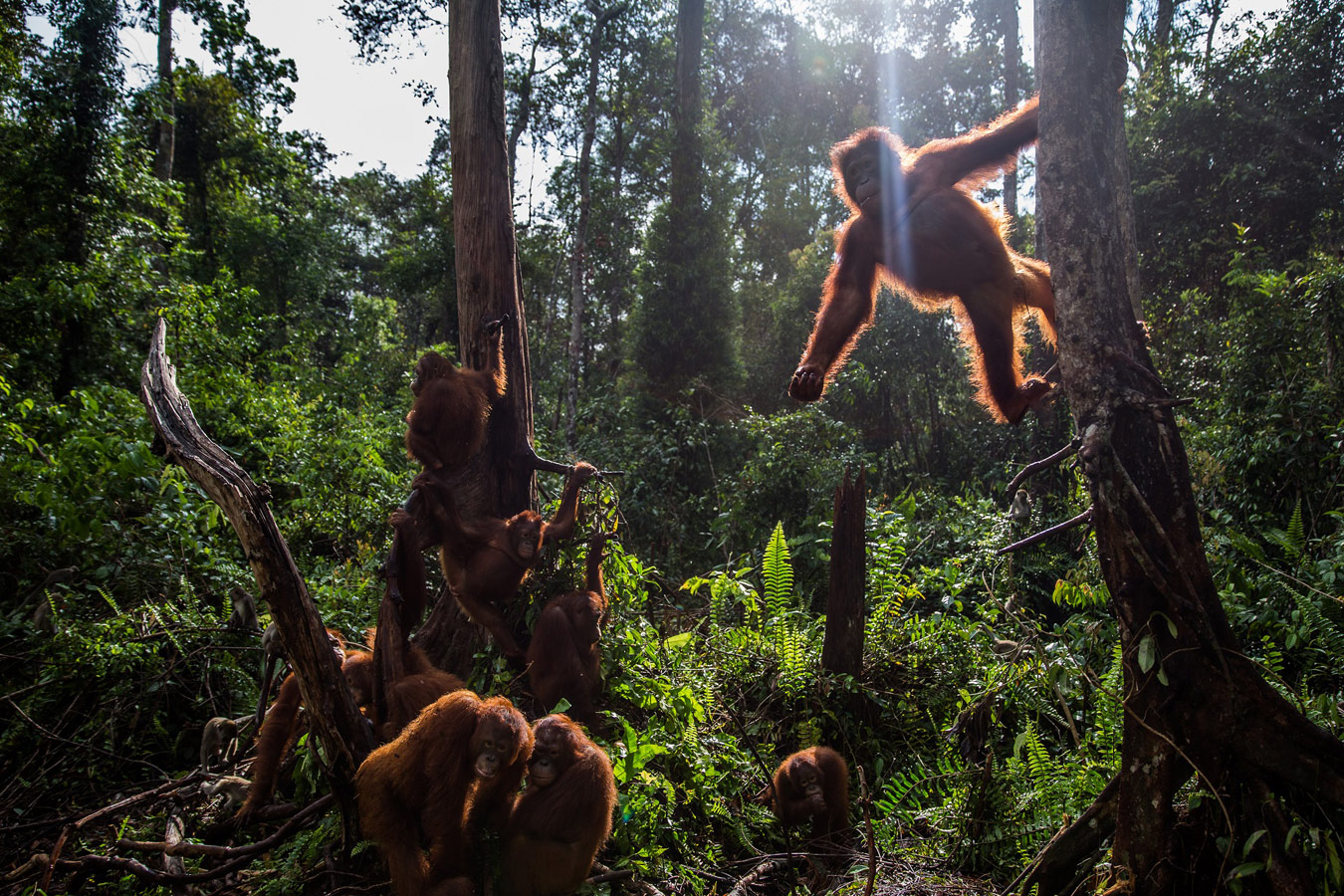 Кемаль Джуфри / Kemal Jufri, Индонезия, 1-я премия в категории «Природа и окружающая среда» (серия), Фотоконкурс Istanbul Photo Awards