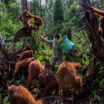 Kemal Jufri, Indonesia, STORY NATURE & ENVIRONMENT 1st PRIZE