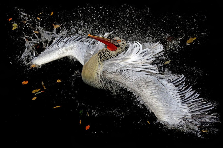 Октябрь, © Михаил Бибичков / Mikhail Bibichkov, Национальный победитель — Россия, Фотоконкурс Metro Photo Challenge