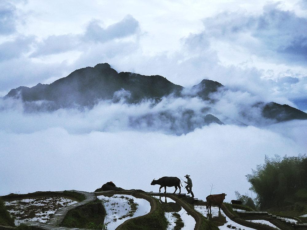 Юнгмей Ванг / Yongmei Wang, Победитель в категории «Живая природа», Фотоконкурс Mobile Photography Awards – MPA