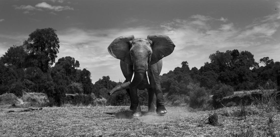Ануп Шах, Великобритания / Anup Shah, UK, Фотограф года (серия), Фотоконкурс MonoVisions