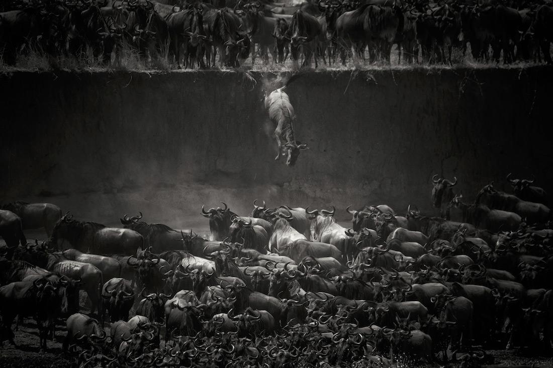 Николь Камбре, Бельгия / Nicole Cambre, Belgium, Победитель в категории «Живая природа» (кадр), Фотоконкурс MonoVisions