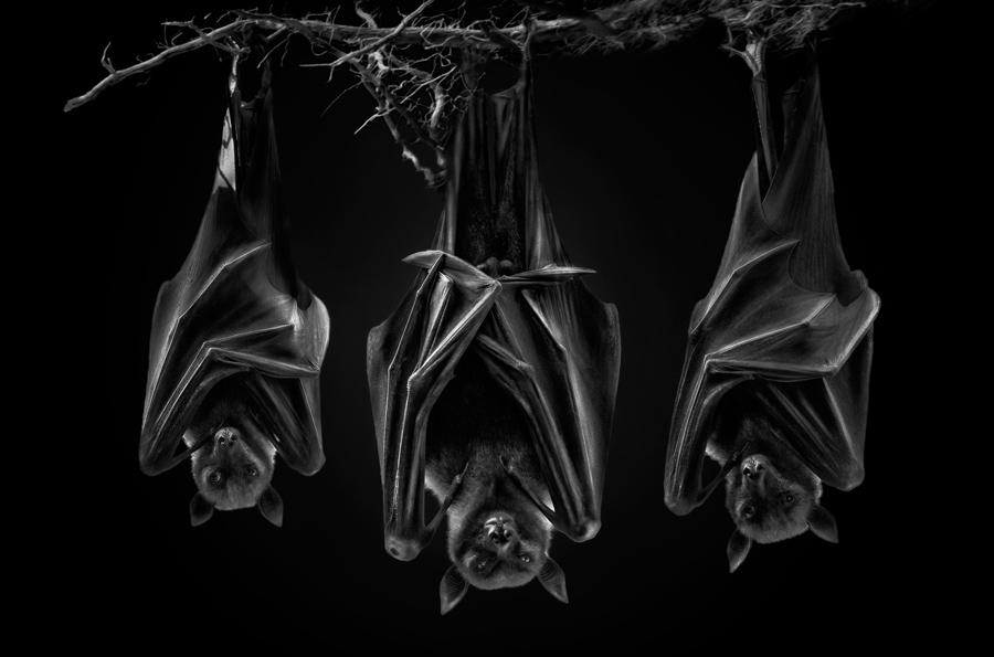 Секта, © Педро Ярк / Pedro Jarque, Перу, Фотограф года в категории «Живая природа», Фотоконкурс Monochrome Photography Awards