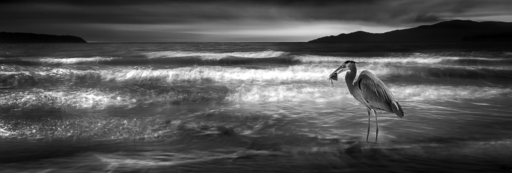 Большая голубая цапля, © Уэсли Шоу / Wesley Shaw, Канада, Победитель категории «Природа: Водные пейзажи», Фотоконкурс ND Awards Photo Contest