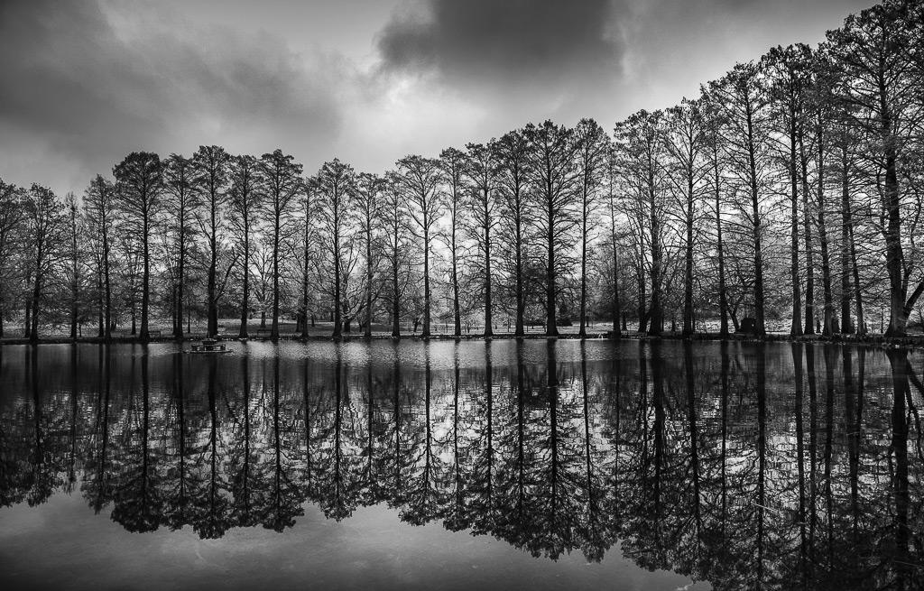 Высоко стоящие, © Джек Карран / Jack Curran, США, Победитель категории «Природа: Деревья», Фотоконкурс ND Awards Photo Contest