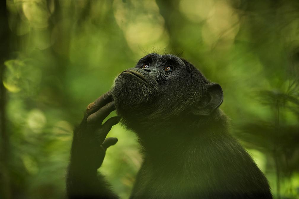 Мыслитель, © Ингрид Векеманс / Ingrid Vekemans, Бельгия, Победитель категории «Природа: Дикая природа», Фотоконкурс ND Awards Photo Contest