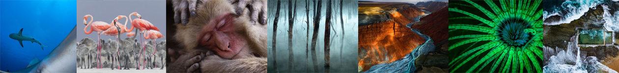 Фотоконкурс Nature Photographer of the Year