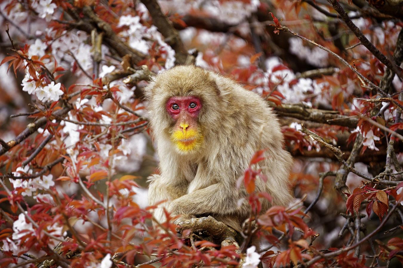 Шиниши Масуда / Shinichi Masuda, Япония, Победитель в категории «Дикая природа», Фотоконкурс «Лучшая природная фотография Азии» — Nature's Best Photography Asia