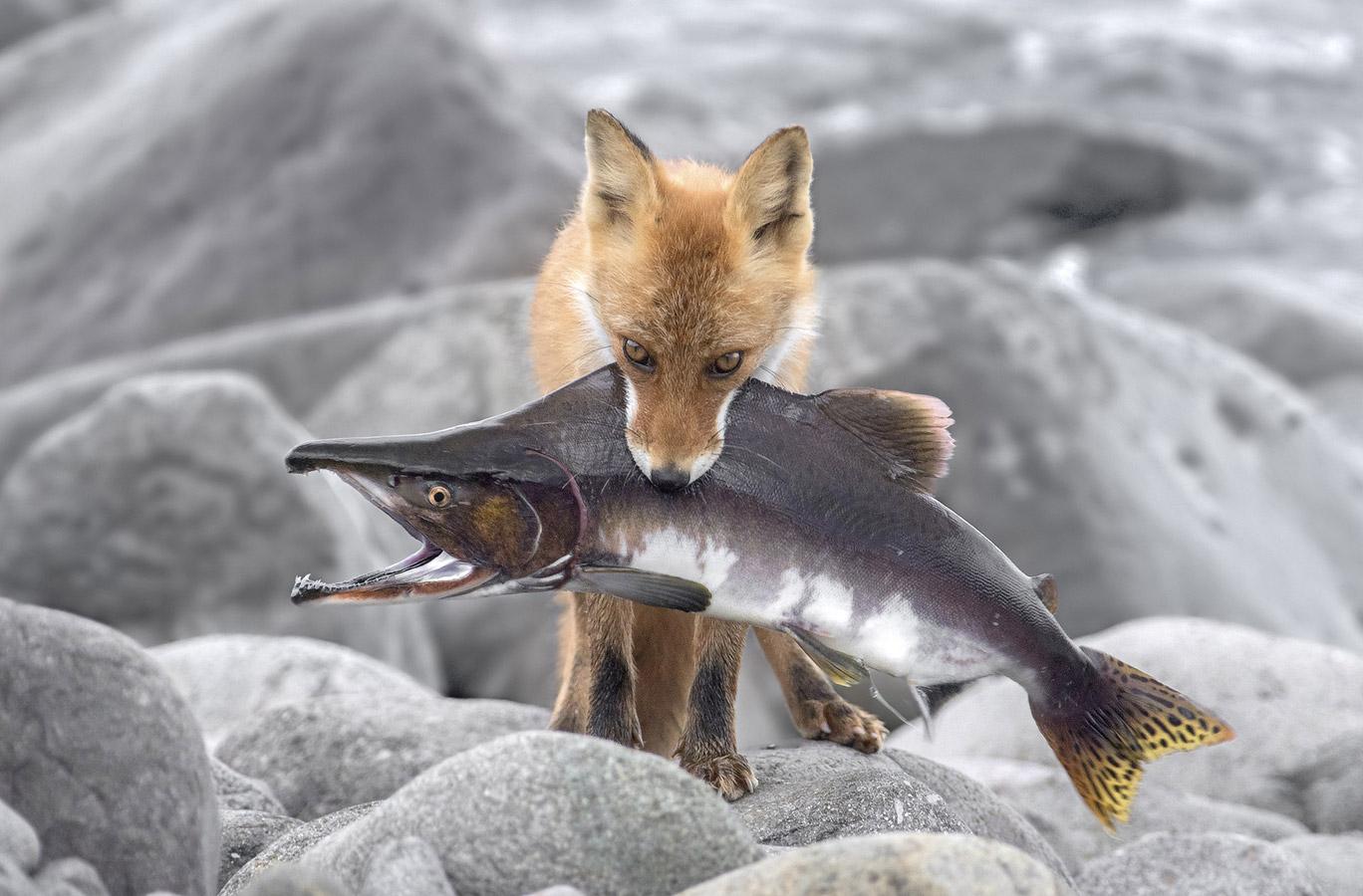 Синдзи Сато / Shinji Sato, Япония, Почётная оценка в категории «Дикая природа», Фотоконкурс «Лучшая природная фотография Азии» — Nature's Best Photography Asia