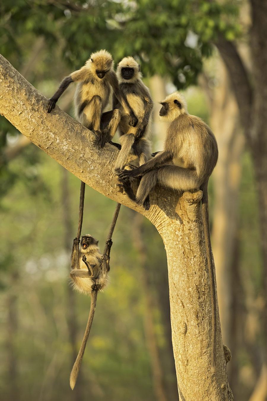 Томас Виджаян / Thomas Vijayan, Оквилл, Канада, Почётная оценка в категории «Дикая природа», Фотоконкурс «Лучшая природная фотография Азии» — Nature's Best Photography Asia
