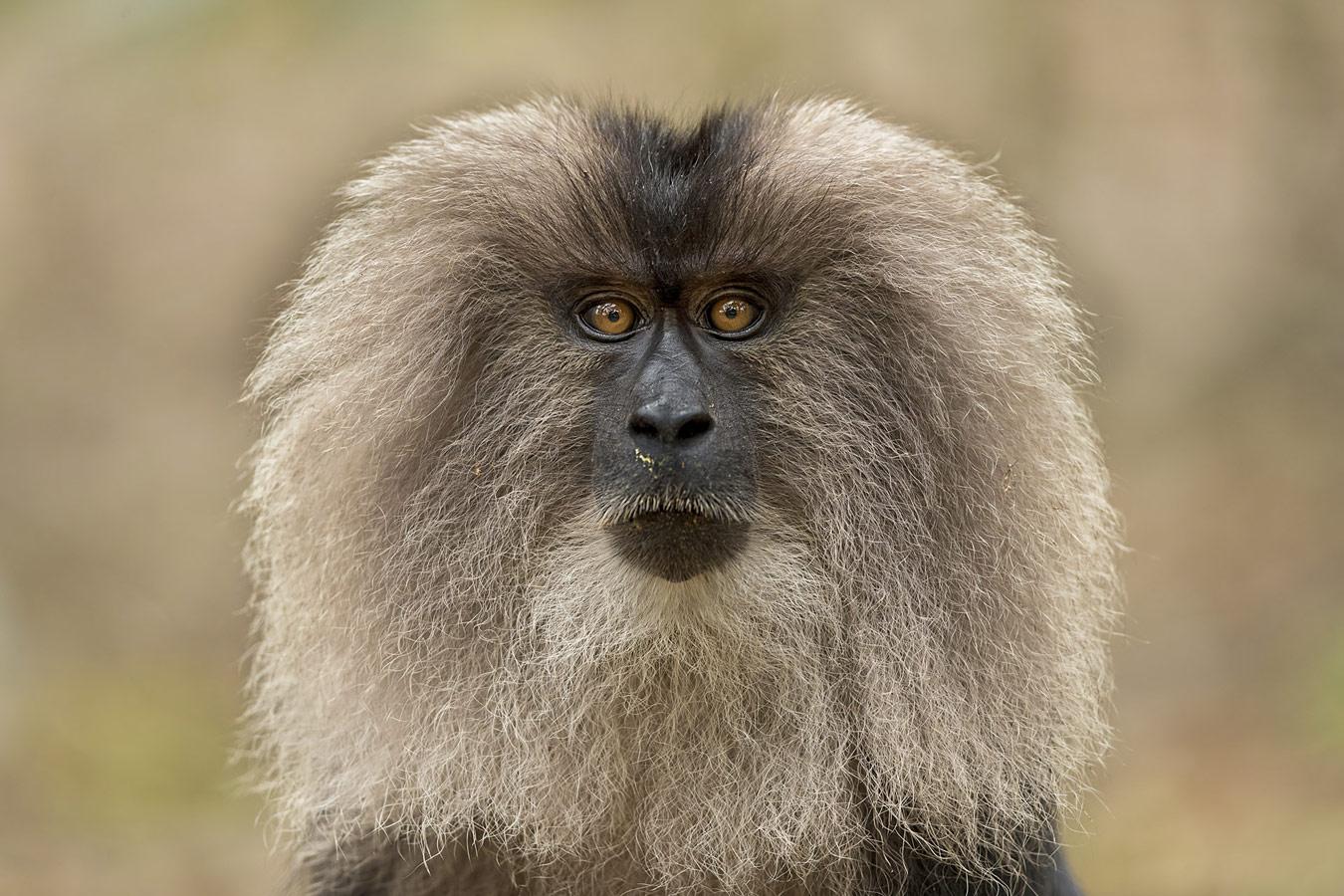 Прамод Ц Л / Pramod C L, Гургаон, Индия, Почётная оценка в категории «Дикая природа», Фотоконкурс «Лучшая природная фотография Азии» — Nature's Best Photography Asia