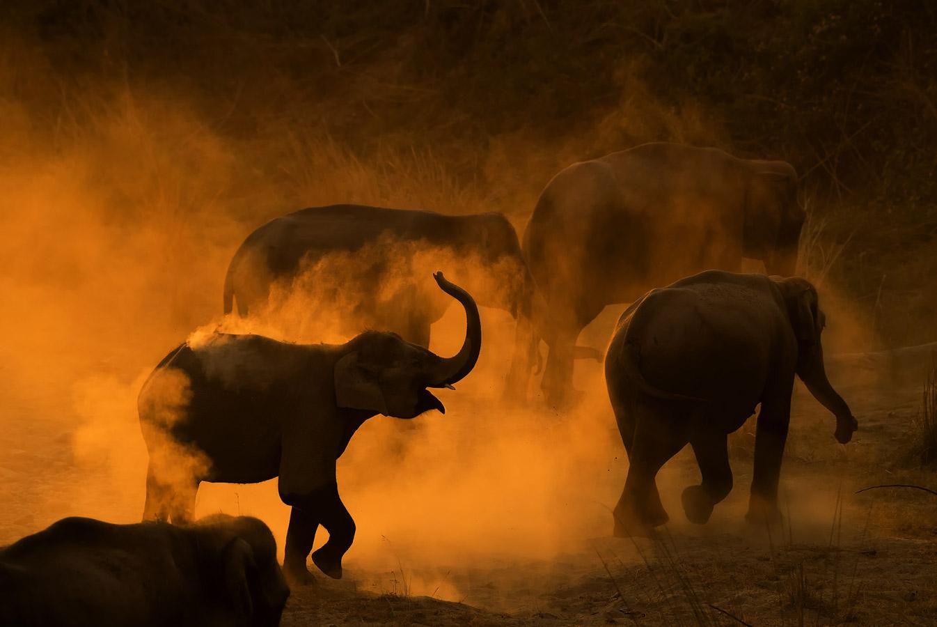 Шиванг Мехта / Shivang Mehta, Харьяна, Индия, Почётная оценка в категории «Дикая природа», Фотоконкурс «Лучшая природная фотография Азии» — Nature's Best Photography Asia