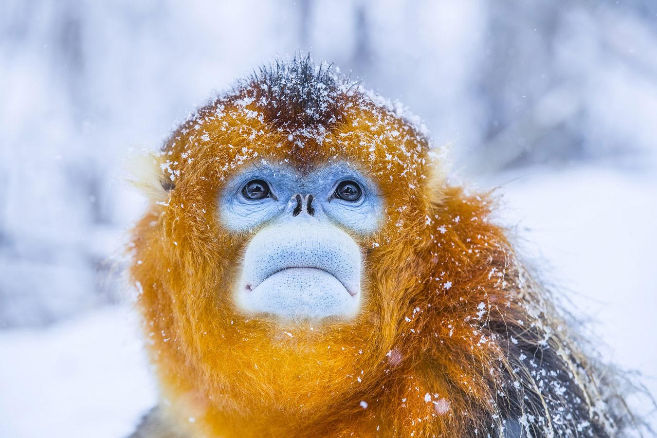 Мингжан Ю / Mingjian Yu, Ухань, Китай, Почётная оценка в категории «Дикая природа», Фотоконкурс «Лучшая природная фотография Азии» — Nature's Best Photography Asia