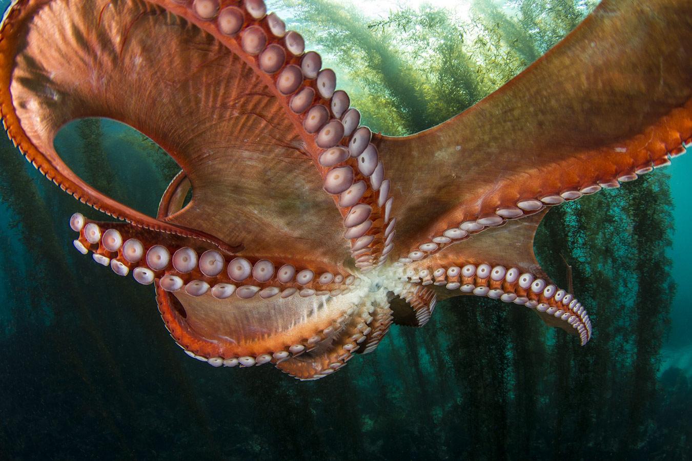 Тору Касуя / Toru Kasuya, Канагава, Япония, Победитель в категории «Океан», Фотоконкурс «Лучшая природная фотография Азии» — Nature's Best Photography Asia