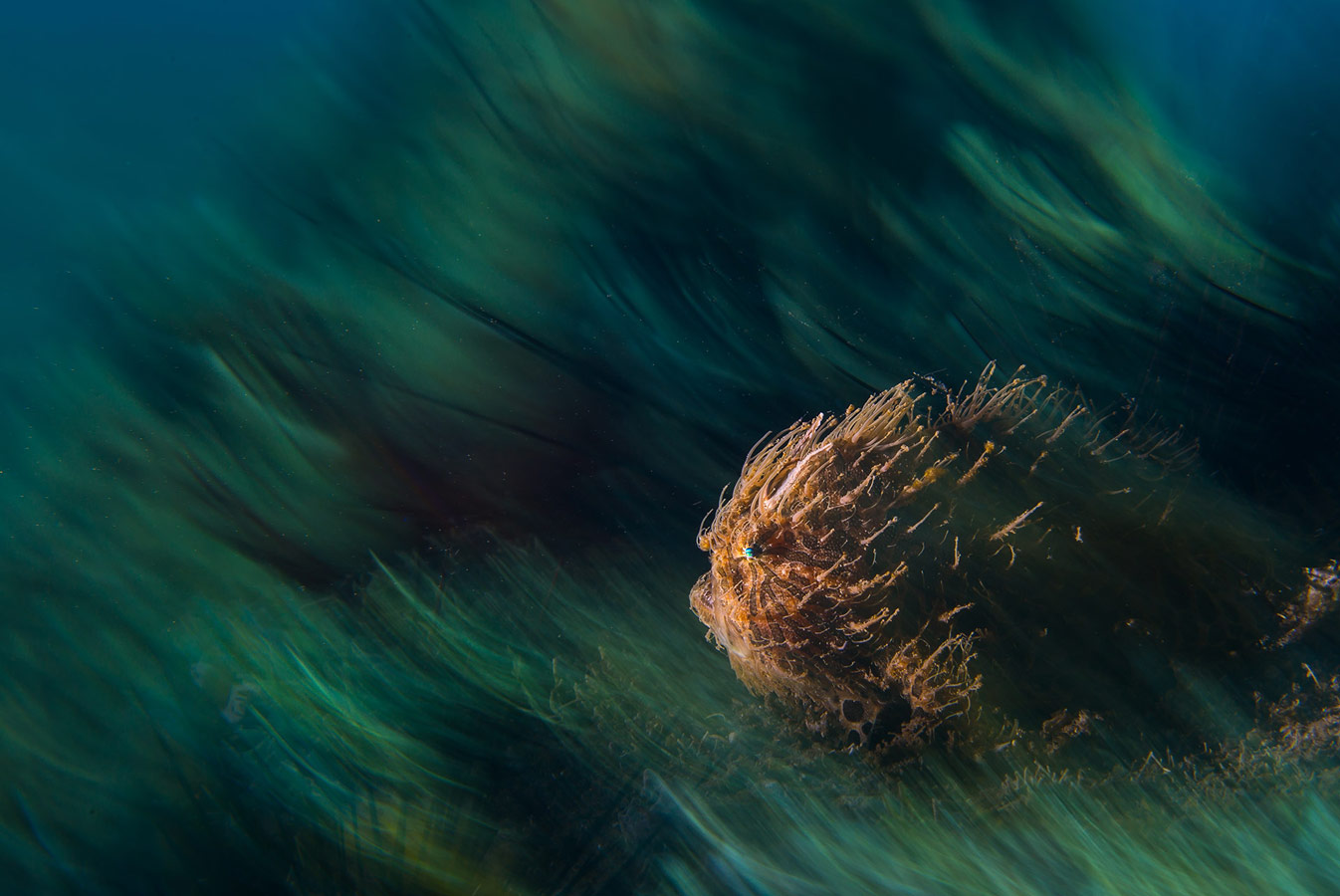 Драгос Думитреску / Dragos Dumitrescu, Филиппины, Почётная оценка в категории «Океан», Фотоконкурс «Лучшая природная фотография Азии» — Nature's Best Photography Asia