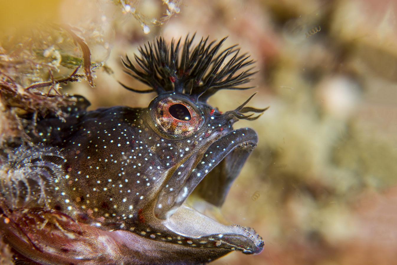 Мицуру Томия / Mitsuru Tomiya, Осака, Япония, Почётная оценка в категории «Океан», Фотоконкурс «Лучшая природная фотография Азии» — Nature's Best Photography Asia
