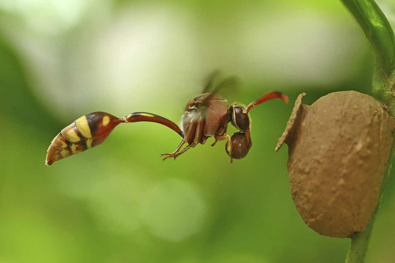 Картикеян Шанмугасундарам / Karthikeyan Shanmugasundaram, Коимбатур, Индия, Победитель в категории «Маленький мир», Фотоконкурс «Лучшая природная фотография Азии» — Nature's Best Photography Asia