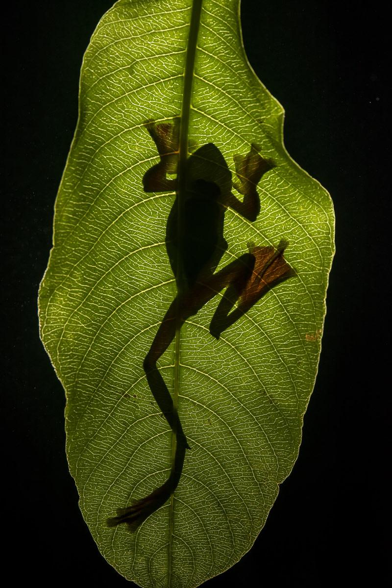 Винод (Байю) Патил / Vinod (Baiju) Patil, Аурангабад, Индия, Почётная оценка в категории «Маленький мир», Фотоконкурс «Лучшая природная фотография Азии» — Nature's Best Photography Asia