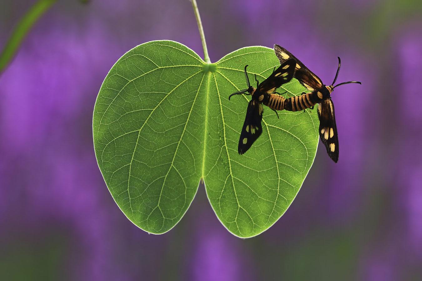 Мингуй Уань / Minghui Yuan, Ухань, Китай, Почётная оценка в категории «Маленький мир», Фотоконкурс «Лучшая природная фотография Азии» — Nature's Best Photography Asia