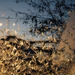 Эмиль Хафизов, Россия / Emile Khafizov, Russia, 1-е место в 1-й премии, тема «Дом» (фотосерия), Фотоконкурс Nikon Photo Contest 2016–2017
