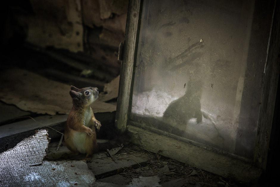 Кай, Финляндия / Kai, Finland, 2-е место в 1-й премии, тема «Дом» (фотосерия), Фотоконкурс Nikon Photo Contest 2016–2017