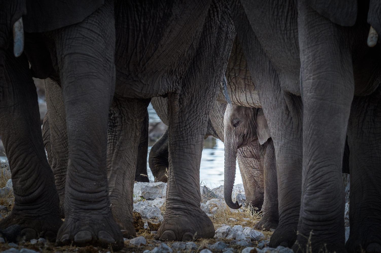 Александр Власов, Под защитой, 1 место в номинации «Животные», любители, Фотоконкурс Nikon «Я в сердце изображения»