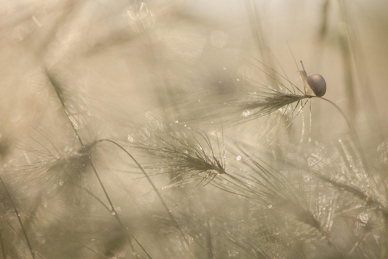 Геннадий Мещеряков, Утро в метёлках..., 2 место в номинации «Животные», любители, Фотоконкурс Nikon «Я в сердце изображения»