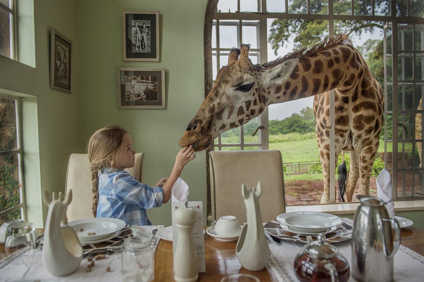 Ирина Остроухова, Завтрак с жирафом, 1 место в номинации «Детская фотография», профессионалы, Фотоконкурс Nikon «Я в сердце изображения»