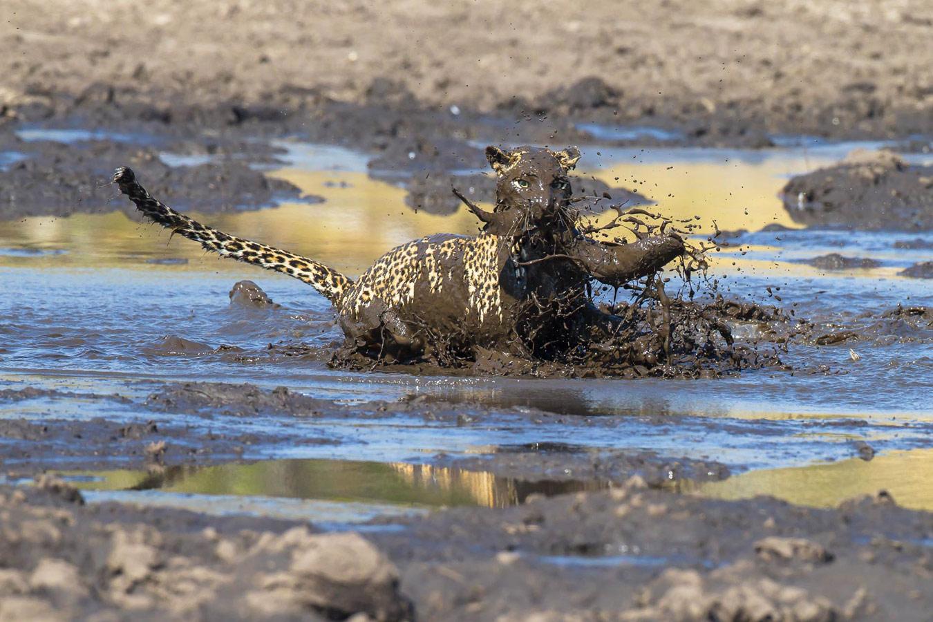 © Джеймс Гиффорд / James Gifford, Победитель премии журнала «Oasis», Фотоконкурс Oasis Photo Contest