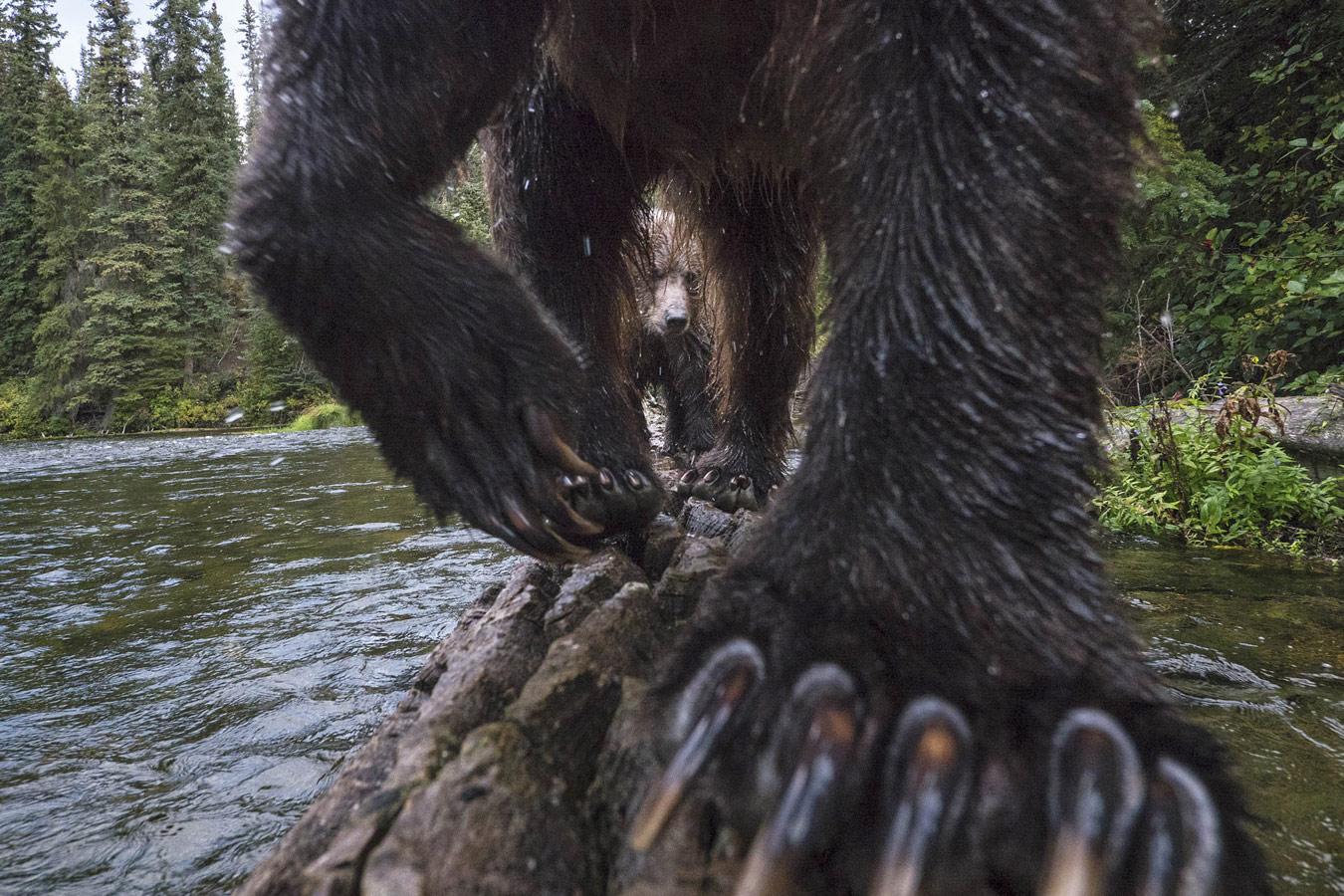 © Питер Матер / Peter Mather, Победитель в категории «Млекопитающее», Фотоконкурс Oasis Photo Contest