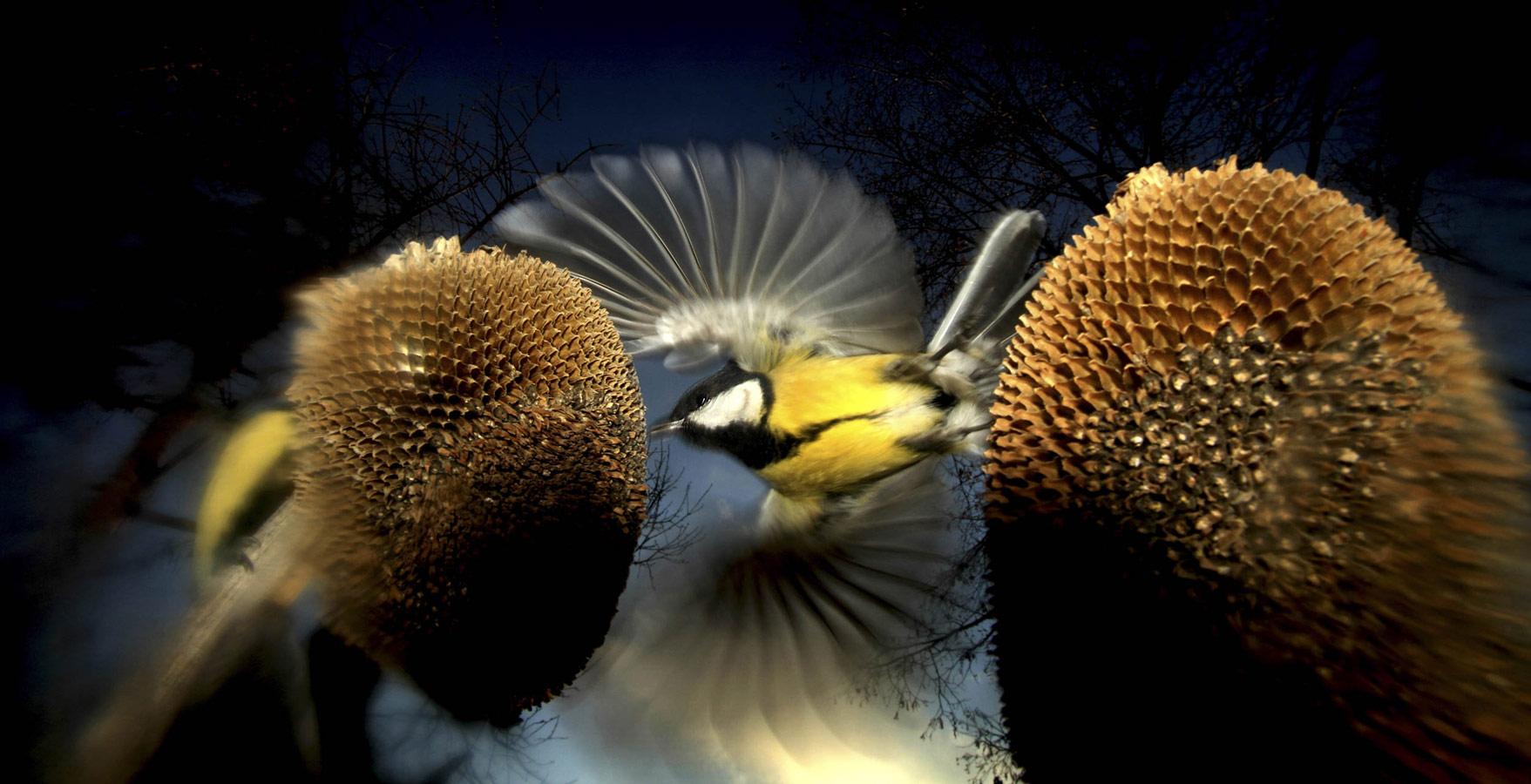 Ритзель Золтан / Ritzel Zoltán, Победитель в категории «Птицы и летучие мыши», Фотоконкурс Oasis Photo Contest