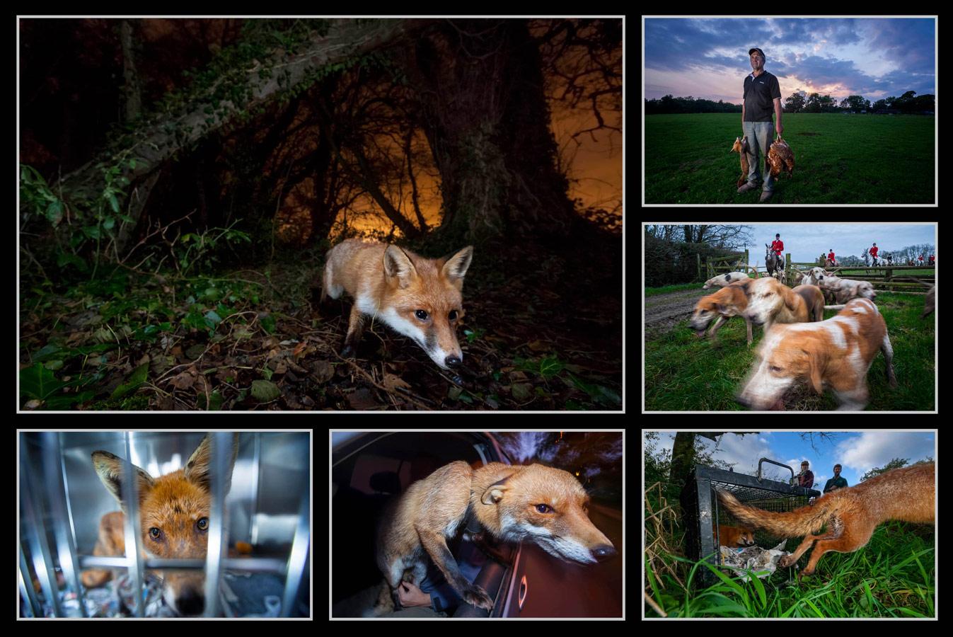 © Нил Олдридж / Neil Aldridge, Победитель в категории «Фотоистория», Фотоконкурс Oasis Photo Contest