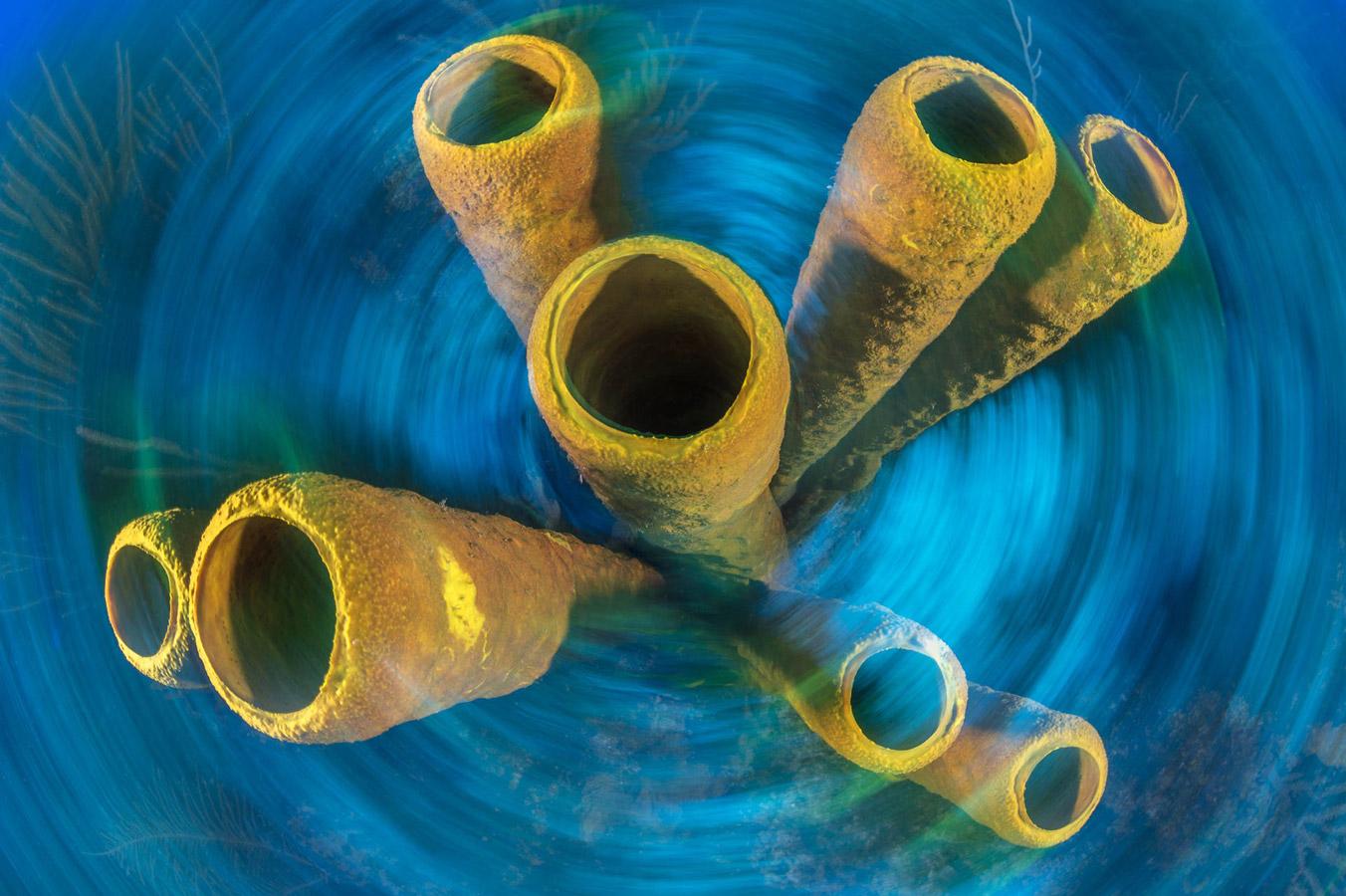 © Алекс Мустард / Alex Mustard, Победитель в категории «Подводная фотография», Фотоконкурс Oasis Photo Contest
