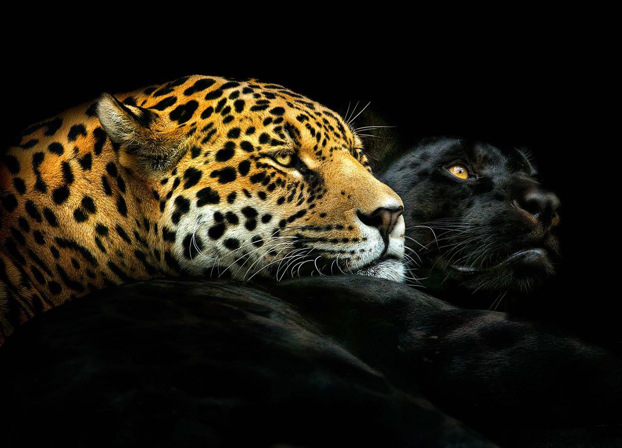 © Педро Ярке / Pedro Jarque, Победитель в категории «Животные», Фотоконкурс Oasis Photo Contest