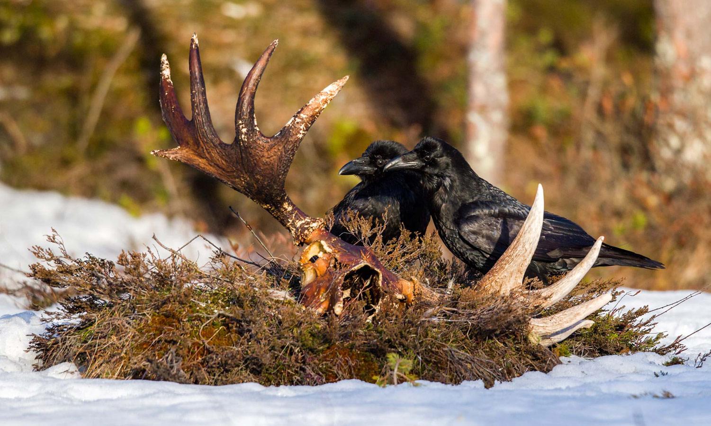 © Лассе Куркела / Lasse Kurkela, Победитель в категории «Малыш», Фотоконкурс Oasis Photo Contest