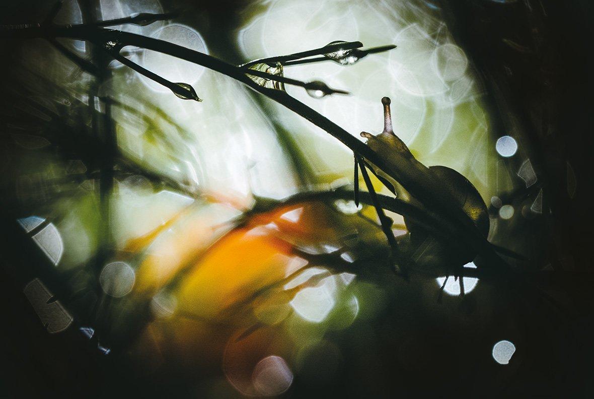 Уильям Маллетт, Великобритания / William Mallett, UK, Победитель категории «Маленький мир», Фотоконкурс Outdoor Photographer of the Year