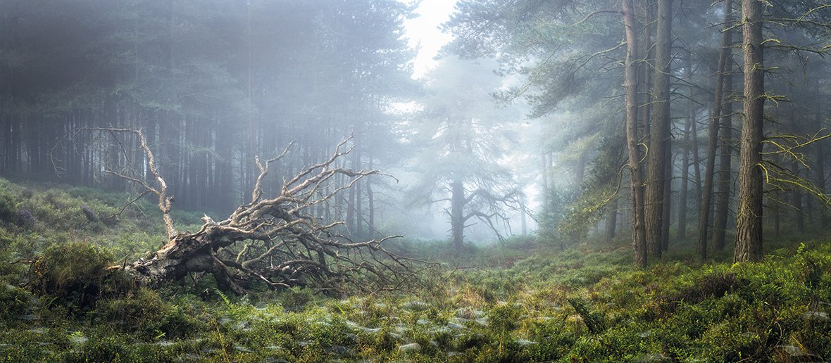 Саймон Бакстер, Великобритания / Simon Baxter, UK, Победитель категории «Свет Земли», Фотоконкурс Outdoor Photographer of the Year
