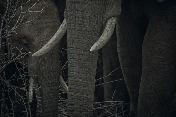 © Алиса ван Кемпен / Alice van Kempen, Нидерланды, Победитель категории «Живая природа», Фотоконкурс Outdoor Photographer of the Year
