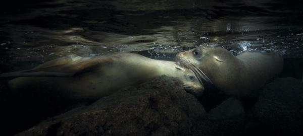 © Йохан Сунделин / Johan Sundelin, Швеция, Победитель категории «Под водой», Фотоконкурс Outdoor Photographer of the Year