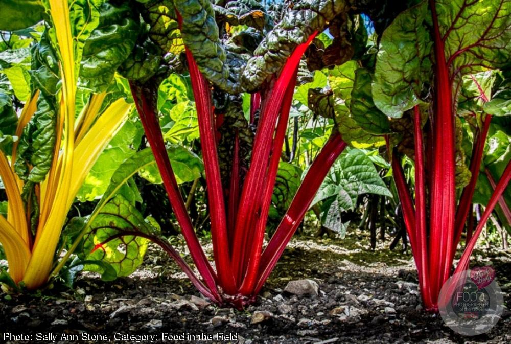Салли Энн Стоун, Великобритания / Sally Ann Stone, UK, Победитель в категории «Food in the Field», Фотоконкурс Pink Lady Food Photographer
