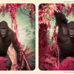 Джим Науштен / Jim Naughten, Номинант конкурса, Фотоконкурс Prix Elysee