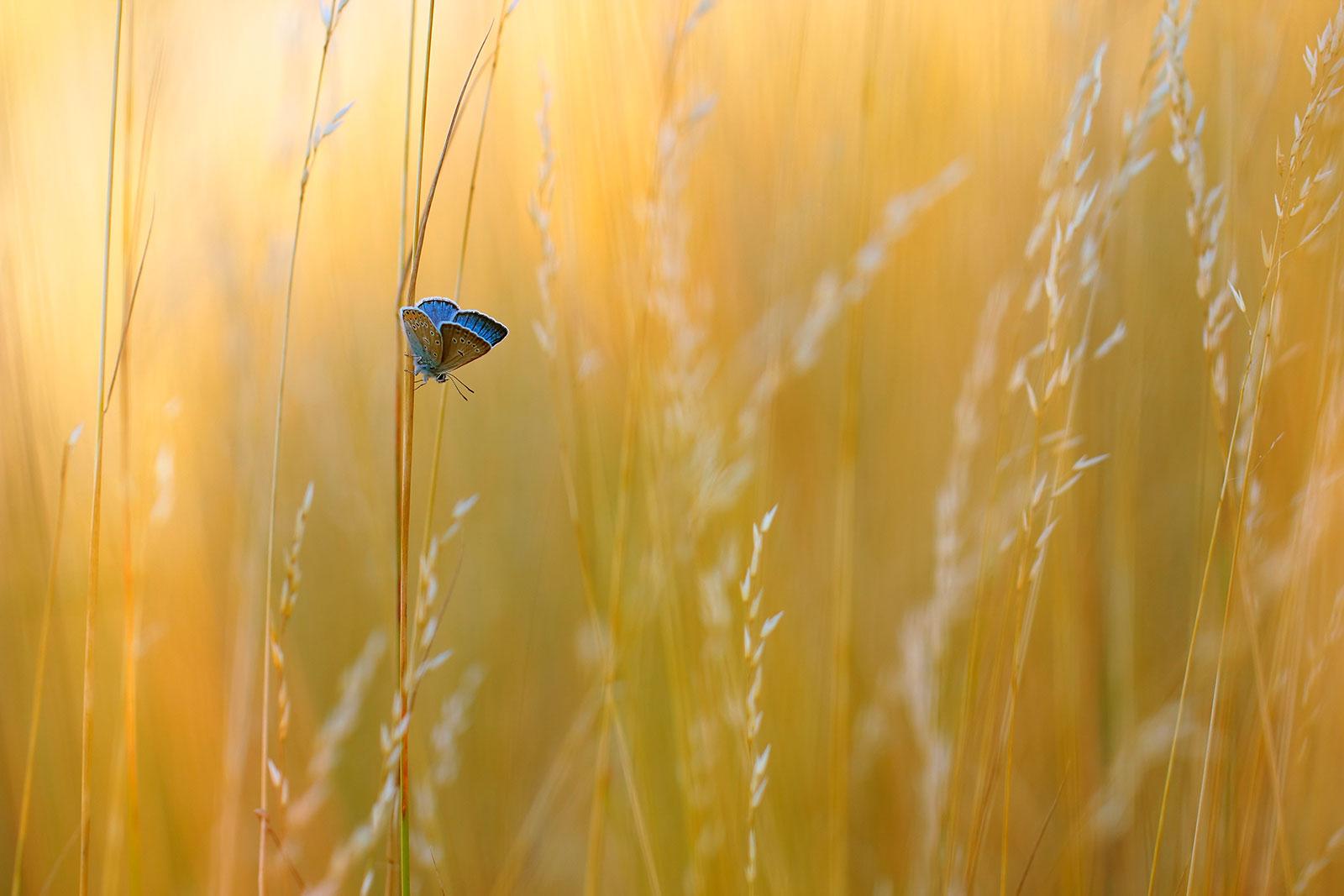 Марек Мьезеевский / Marek Mierzejewski, Победитель в категории «Живая природа сада», Фотоконкурс RHS Photographic Competition