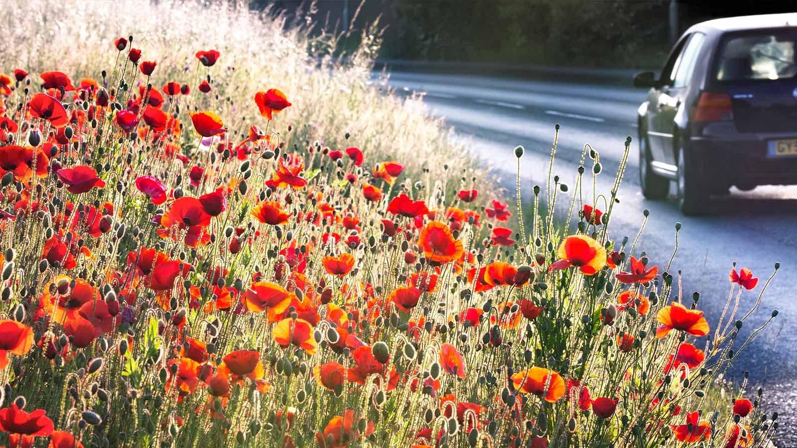 Найджел Буркит / Nigel Burkitt, Победитель в категории «Озеленение серой Британии», Фотоконкурс RHS Photographic Competition