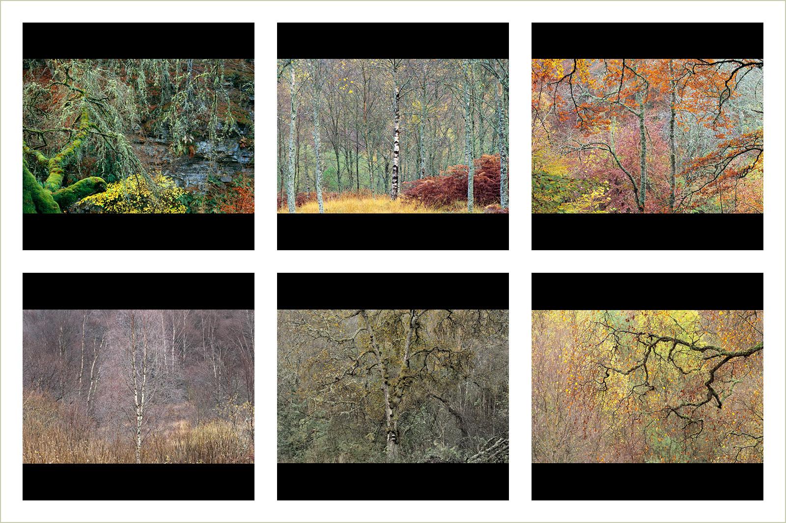 Стивен Уайтхорн / Stephen Whitehorne, Победитель в категории «Фотоальбом», Фотоконкурс RHS Photographic Competition