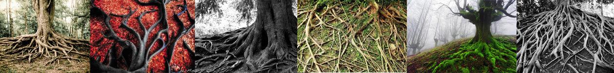 Фотоконкурс Roots Mobile Photo Contest