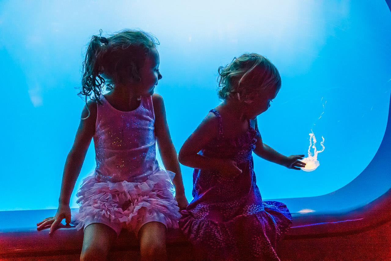 Медузы, Биами Янг / Beamie Young, Дикерсон, Фотоконкурс Santa Fe Photographic