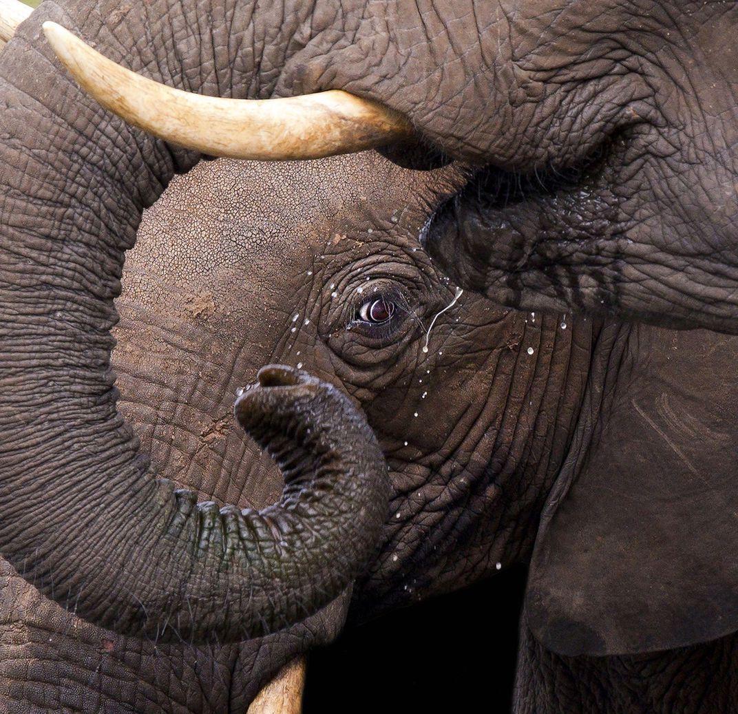 Прелена Сома Оуэн, Южная Африка / Prelena Soma Owen, South Africa, Победитель категории «Природный мир», Фотоконкурс Smithsonian Photo Contest