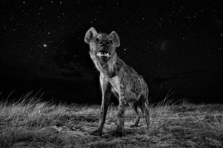 Вилл Беррард-Лукас, Великобритания / Will Burrard-Lucas, UK, Победитель в категории «Природный мир» (профессионал), Фотоконкурс Sony World Photography Awards